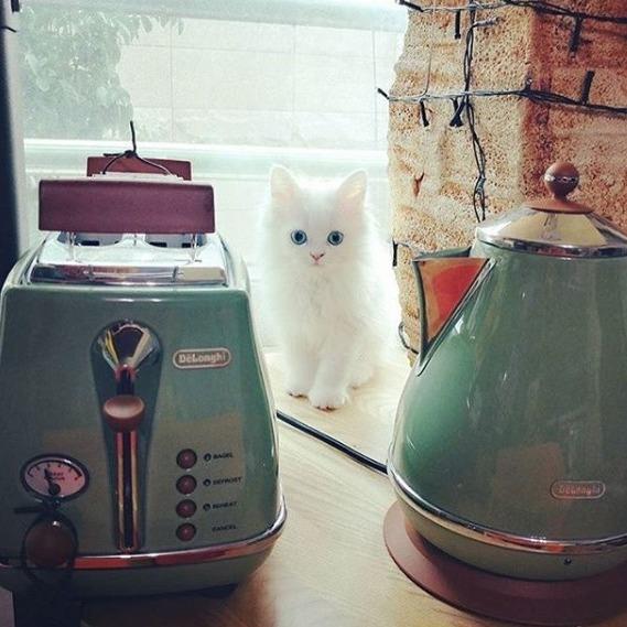 今天截止:eBay 颜值与品质在线的电热水壶合集